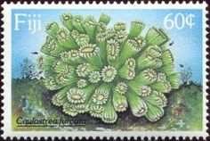 Stamp%3A%20Candy%20Cane%20Coral%20(Caulastrea%20furcata)%20(Fiji)%20(Coral)%20Mi%3AFJ%20603%2CSn%3AFJ%20608%2CYt%3AFJ%20604%20%23colnect%20%23collection%20%23stamps Fiji Culture, Stamp Collecting, Marine Life, Seashells, Candy Cane, Postage Stamps, Vintage Photos, Flora, History