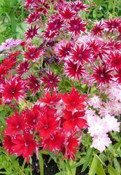 Pin On Dzialka Kwiaty2 Guality Seeds Flower Live