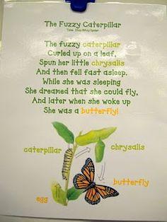 caterpillar song