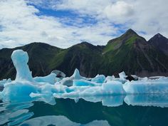 Just over half of Kenai Fjords National Park is covered by ice. Pictured here are bergs birthed from the Bear Glacier, the biggest in the park.