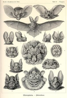 ernst heinrich philipp august haeckel(1834-1919)
