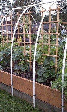 Planning on building raised beds this year? This is a great design. The trellis helps you grow more in a small space, and the piping means you can cover it for added heat or pest protection.