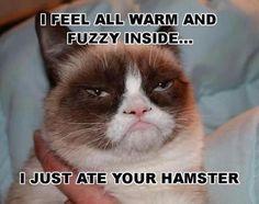 Grumpy cat ate the hamster!