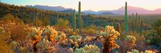 Sonoran Desert, Organ Pipe Cactus National Monument, AZ by Alain Thomas! #desert #mural