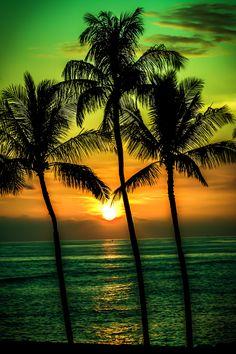 EeE Kurt — hashpe: Kiwi Sunset | © | HP