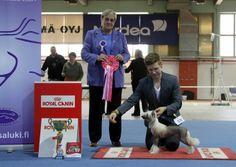 Hyvinkää 20.4.2013 (puppy show). FCI 9 + BIS: Arte Figure Happy Ending, Chinese Crested Dog