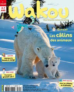 Wakou 310, janvier 2015. Photo : Eric Baccega/NPL. #ours blanc