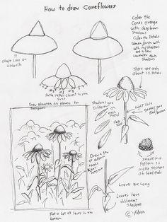 Adron's Art Lesson Plans: How to Draw Cone Flowers Art Lesson For Young Arti. - Garden Style - Adron's Art Lesson Plans: How to Draw Cone Flowers Art Botanical Line Drawing, Floral Drawing, Flower Art Drawing, Flower Drawing Tutorials, Art Tutorials, Painting Tutorials, Drawing Lessons, Drawing Techniques, Drawing Ideas
