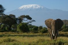 Amboseli National Reserve, Kenya, with Moutn Kilimanjaro, Tanzania in the background.  If you are going on safari, it would be hard to imagine a more awesome backdrop.