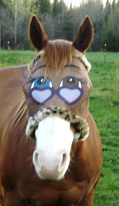 Painted Horse Fly masks