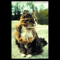 Towser ~ The distillery cat. Towser holds the world record for the total number of mice caught in her lifetime, a staggering 28,999!.