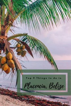 Top 9 things to do in Placencia, Belize – Blue Eyed Compass Belize Resorts, Belize Vacations, Belize Travel, Belize Honeymoon, Honeymoon Ideas, Vacation Ideas, Weather In Belize, Stuff To Do, Placencia