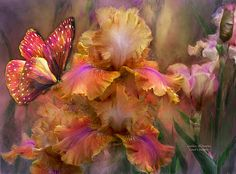 Iris - Goddess Of Sunrise by Carol Cavalaris. Prints available at Fine Art America. Goddess Of Sunrise is from the Language Of Flowers series, Iris Collection, from the original art of Carol Cavalaris. Goddess of Sunrise, your colors always a surprise, of hot pink, gold and flame, too wild and beautiful to tame. This painting of irises in the colors of a vibrant sunset with a matching butterfly makes a lovely canvas,print, and/or greeting card.
