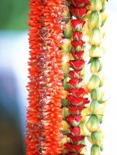 Hawaiian Lei's - so exotically fragrant ! Plumeria Flowers, Hawaiian Flowers, Tropical Flowers, Hawaiian Leis, Flower Lei, Flower Garlands, Aloha Hawaii, Tropical Paradise, Flower Power