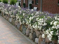 Beetrose 'Aspirin' ® - Rosa 'Aspirin' ® ADR-Rose#adrrose #aspirin #beetrose #rosa Rockery Garden, Garden Plants, Indoor Plants, Hydrangea Care, Hydrangea Flower, Rose Plant Care, San Diego, Garden Front Of House, Types Of Colours