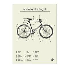 Anatomie van een fiets