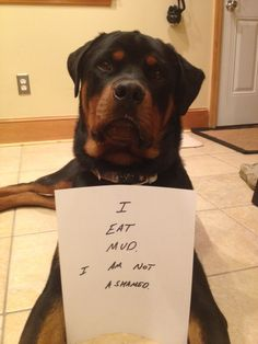 """""""I EAT MUD and I am not ashamed."""" ~ Dog Shaming shame - Rottweiler - Mud-Dog...oh yes this is what my rottweiler does too. and plays in it. if there were one mud puddle left on the planet he would find it and roll around in it...."""