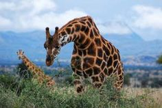 Murchison Falls, Uganda- Regular visitors include elephants, giraffes and buffalos while hippos and Nile crocodiles are permanent residents.