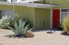 The combination of pea green and burnt orange is a signature of mid-century modern homes. Love how such a spare planting can look so rich! Photo by Maureen Gilmer of Morongo Valley, CA. Intimidated by bold color schemes? Read how to use them here http://www.landscapingnetwork.com/landscape-design/color-selection.html