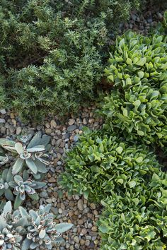 Gravel garden | Peter Fudge | FRONT YARD