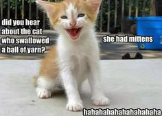 Here's a really bad cat joke for your enjoyment!