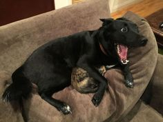 A Dog Protected A Cat During A Thunderstorm And The Internet Went Awwww - Yahoo UK