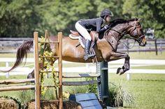 Horse Training Tips, Horse Tips, Horse Stalls, Horse Barns, Horse Saddles, Western Saddles, Hunter Horse, George Morris, Equestrian Problems