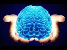 [ National Geographic ] The Human Brain - Nat Geo Wild HD Documentary 2015 - YouTube