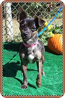 Act quickly to adopt  Pets at this Shelter may be held for only a short timeMarietta, GA - Chihuahua Mix. Meet TINSLEY a Dog for Adoption.