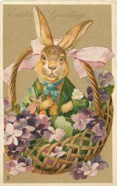 rabbit dressed in green sits in basket of violets