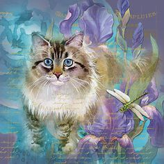 Houdini Kitten Cat and dragonfly flowers
