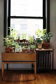 plants in the windows.
