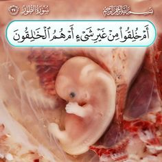 Or were they created by nothing, or were they the creators [of themselves]? Quran Verses, Quran Quotes, Faith Quotes, Allah, The Creator, Heart, Islamic, Science, Children
