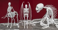 Remains of Mythical Creatures & Cyptids Brought into Reality With 3D Printing http://3dprint.com/13077/3d-printed-mythical-creatures/