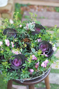 花植物ギャザリング・多肉植物寄せ植え販売通販のアトリエ華もみじ HMstore Small Space Gardening, Green Flowers, Container Gardening, Flower Power, Planting Flowers, Flower Arrangements, Succulents, Seeds, Bouquet