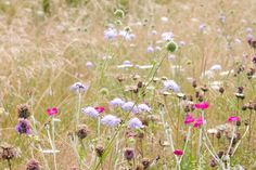 Discover 10 gorgeous UK native wildflowers to sow and grow, including annual and perennial choices, from the experts at BBC Gardeners' World Magazine. Wild Flower Meadow, Wild Flowers Uk, Garden Drawing, Garden Architecture, Back To Nature, Shade Garden, Native Plants, Perennials, Outdoor Gardens