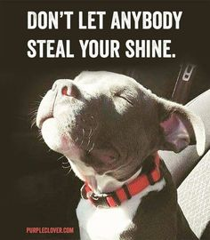 """Don't let Anybody steal your SHINE"", beautiful Pitt Bull Puppy"