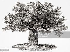 Картинки по запросу гравюра с изображением дерева