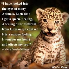 There are many different type of cats and most cats have something unique about them. Some of the cats are unique with different body structure. Different Types Of Cats, Kinds Of Cats, Beautiful Creatures, Animals Beautiful, Conservative Quotes, Baby Animals, Cute Animals, War Dogs, Pet Day