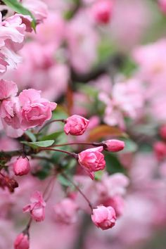 Peach Blossoms, Cherry Blossom, Colorful Plants, Lace Embroidery, Photo Art, Natural Beauty, Seasons, Wallpaper, Rose