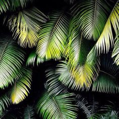 Find images and videos about summer, nature and green on We Heart It - the app to get lost in what you love. Tropical Garden, Tropical Plants, Green Plants, Tropical Leaves, Paradise On Earth, Plant Pictures, Disney Instagram, Landscape Illustration, Illustration Art