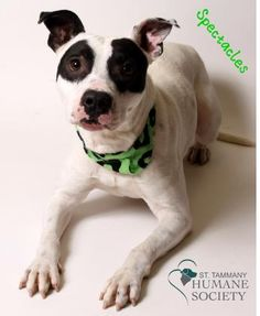 2 year old male, neutered, mix breed.  Survived heartworms and is ready to give you his heart!