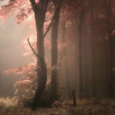 Mystical images by Czech-based photographer Janek Sedlar.