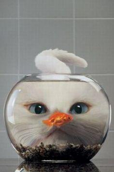 #cute animal 월드카지노 HERE777.COM 월드카지노