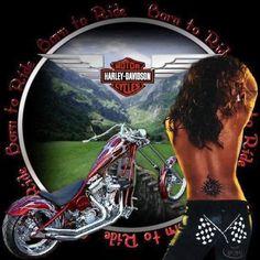 Harley Davidson Glasses, Harley Davidson Images, Harley Davidson Posters, Harley Davidson T Shirts, Harley Davidson Dyna, Harley Davidson Motorcycles, Pin Up Motorcycle, Harley Dealer, Motor Harley Davidson Cycles