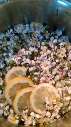 Sedmikráskový sirup Skvělý, bezpečný a jemně působící na nachlazení a kašel,na čistění jater a posílení ledvinpro malé děti. Postup výroby: Tři hrsti sedmikrásových květů přelít 750 vroucí vody, přidat omytý, na plátky nakrájený citron a nechat do druhého dne. Druhý den scedit přes lněné plátýnko, přidat 750g cukru, povařit 7 minut a slít do lahví.… Medicinal Herbs, Home Recipes, Prosecco, Life Is Good, Smoothies, Detox, Herbalism, Spices, Remedies