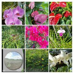 TerreOrganics, comprometidos con la conservación de la vida,  del ambiente y el desarrollo sustentable. TerreOrganics aplicación en jardineria y floricultura, embellece tu vida y tu hogar, piensa en verde-actúa en verde🌎🌳💯✔
