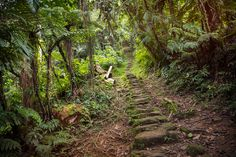 1200 steps lead up to Colombia's Lost City.