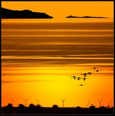 """""""Flamingos in flight at sunrise,""""  By: Giangiorgio Crisponi -- From the tags, it appears that this is Sardinia."""