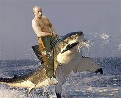 Putin domesticating a shark! You just have to love photoshop!